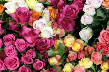 Красивые цветы сайт