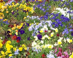 Клумбы с многолетними цветами  фото 84