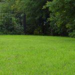 Стоимость посевного газона