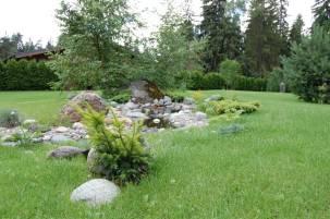 трава для газона вытесняющая сорняки