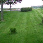 Устройство газона с сеткой от кротов