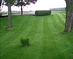 устройство газона с сеткой