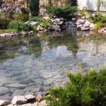 Чистка прудов и водоемов цена