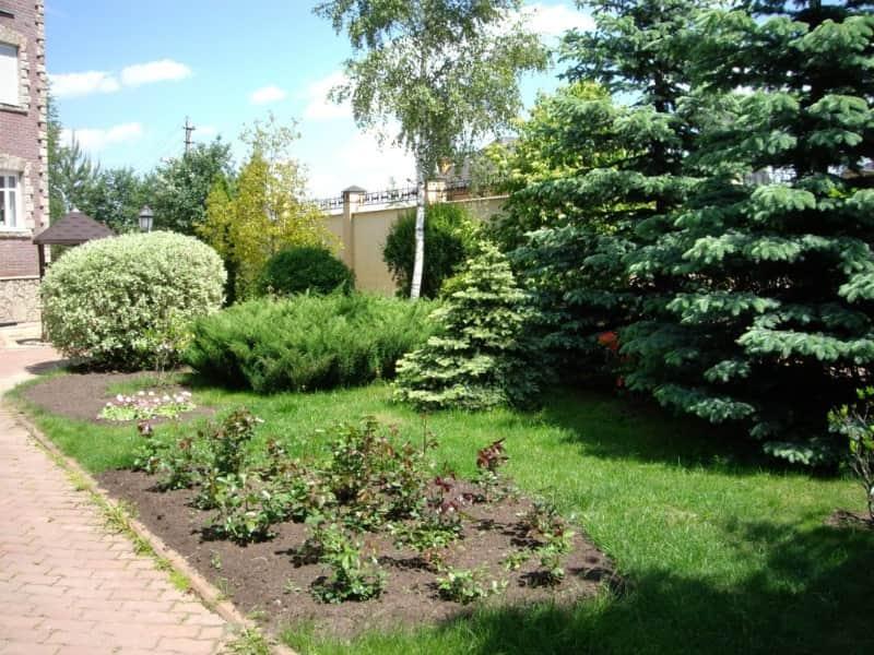 цена растений для ландшафтного дизайна