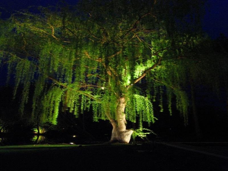 декоративная подсветка дерева